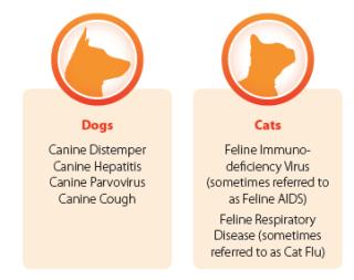 cat-dog-vaccinations