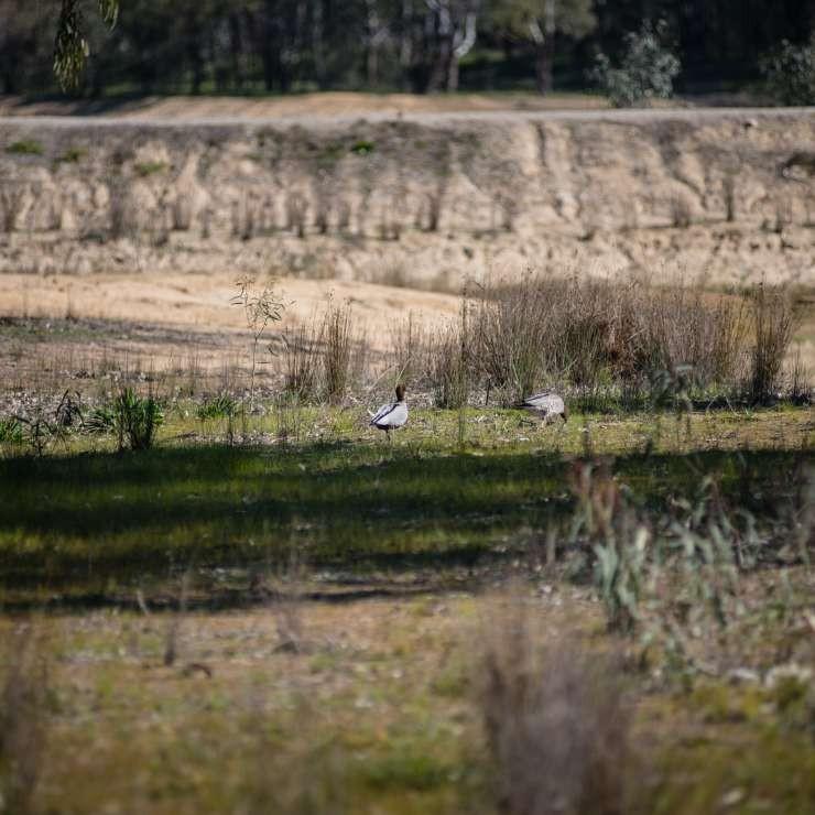 Birds near wetland
