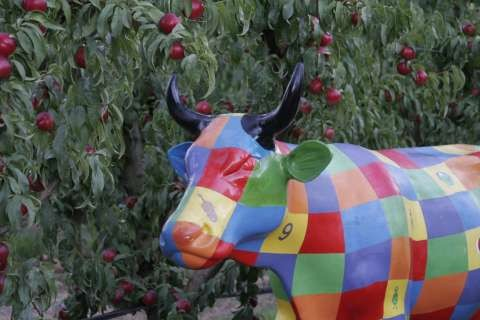 One of Moooving Art's colourful cows.